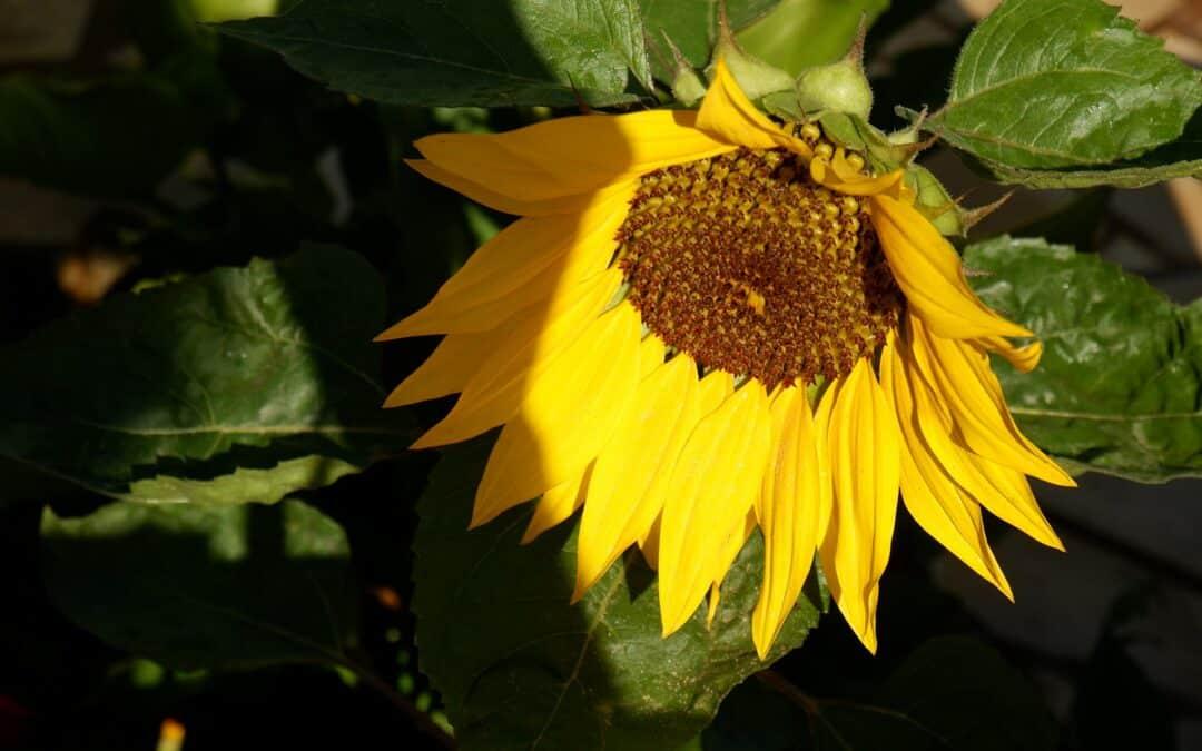 Concours fleurissement : inscriptions ouvertes