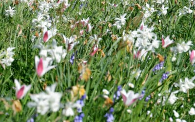Ville fleurie… naturellement
